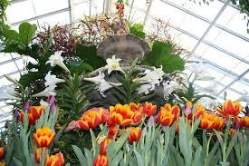 spring flower exhibit u0026 4 h farm buffalo botanical gardens