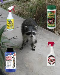 raccoon repellent what deterrent works
