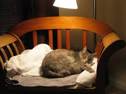Petco Cat Beds Cat Beds Heated Luxury Outdoor Petco At Walmart 2291374 L Msexta