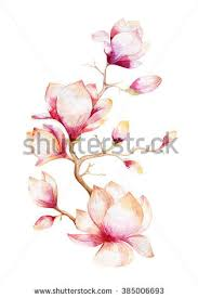 magnolia watercolor stock images royalty free images u0026 vectors