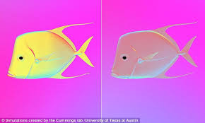 Finding Nemo Light Fish Why Fish Are Better At Disappearing Than Houdini Was Daily Mail