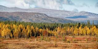 simple tips for shooting autumn colours swedish lapland