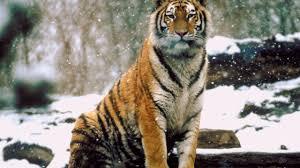 world u0027s deadliest animals photos world u0027s deadliest animals