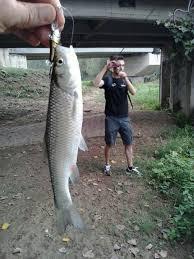 canne si e decathlon decathlon pescatori laziali