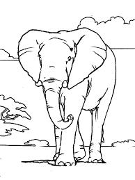Coloriage Éléphant adulte dessin gratuit à imprimer