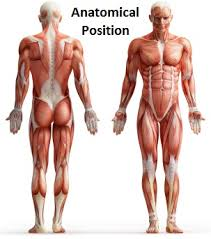Human Anatomy And Physiology Terminology Anatomy And Physiology Terminology Lessons Tes Teach