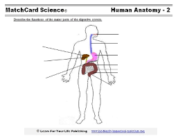 human body system worksheet free worksheets library download and