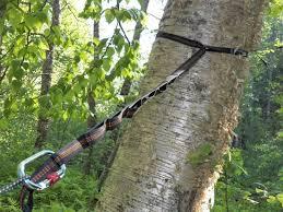 popular hammock straps installing the tree hammock straps