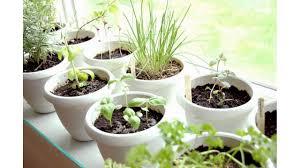 small indoor herb garden youtube