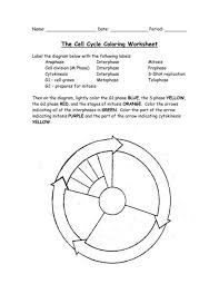 cell cycle coloring worksheet 1 free printable coloring pages
