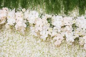 wedding backdrop green beautiful white and green backdrop flowers of orchid