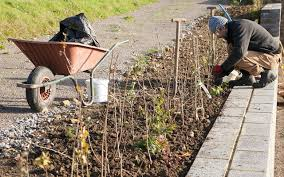 native hedgerow plants hedge planting u2013 dig delve u2013 an online magazine about gardens