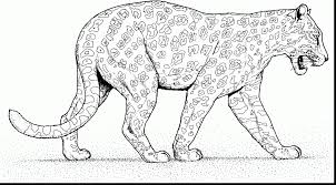 astounding snow leopard coloring pages with cheetah coloring pages