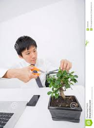 asian businessman pruning plant at office desk royalty free stock