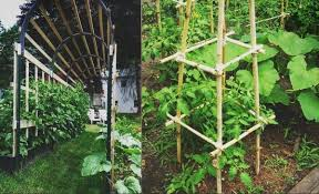 Tomatoes Trellis 32 Creative Diy Tomato Trellis And Cage Ideas For Growing Tomatoes