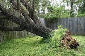 is it possible to replant an uprooted tree tree service fishers