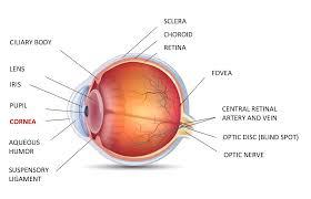 Symtoms Of Blindness Onchocerciasis River Blindness