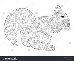 vector illustration squirrel nut zentangle ethcnic stock vector