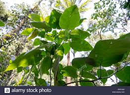 eden u0027s spice and herbal garden in thekkady kerala india stock