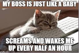 Keyboard Cat Meme - bored keyboard cat memes imgflip