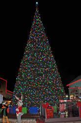 Christmas Lights Etc Six Flags Discovery Kingdom Chooses Giant Led Christmas Tree And