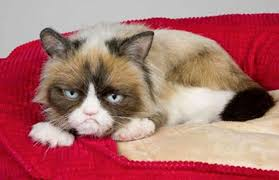 Original Grumpy Cat Meme - grumpy cat wins 710 001 in copyright lawsuit memes have rights