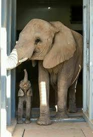 asian elephant ring holder images 864 best elephants on parade images elephant jpg