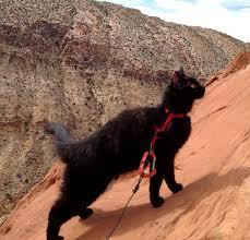 Rock Climbing Memes - i can has cheezburger rock climbing funny internet cats cat