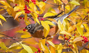 the best trees vines and shrubs to plant for birds a starter list