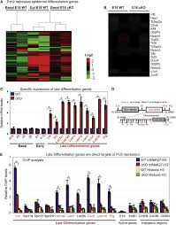 ezh2 orchestrates gene expression for the stepwise differentiation