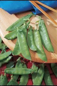 growing peas hgtv