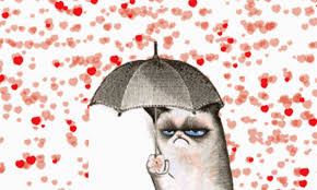 grumpy cat valentines grumpy cat s day gif weknowmemes