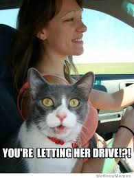 New Driver Meme - hilarious story of a woman s first time driving on a highway
