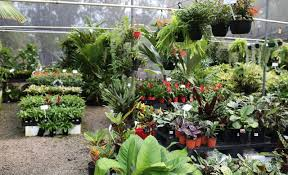 australian native plants brisbane the best places to buy plants in brisbane concrete playground