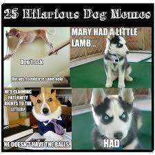 Silly Dog Meme - funny dog memes the ultimate collection dog training basics
