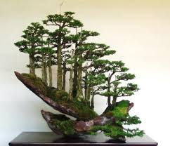 bonsai the beautiful and artistic trees xfilexplore
