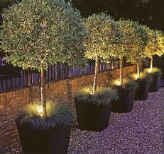 Outdoor Up Lighting For Trees Best 25 Lights In Trees Ideas On Pinterest Lights In Garden