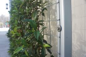 klimrozen opbinden google zoeken tuin pinterest wire mesh
