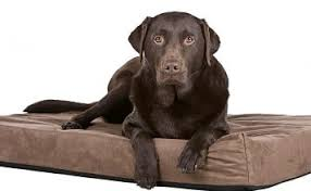 tough dog beds best indestructible dog beds for tough chewers