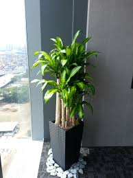 office plants rental chye heng orchid garden pte ltd plants