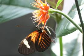 switch that turned moths black also colors butterflies