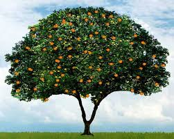 the entire tree review parfum d empire azemour les orangers
