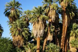 29 palms a joshua tree hidden gem no back home