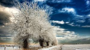 winter christmas ornaments lights pretty tree winter photos