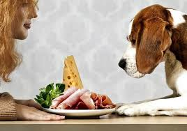Dogs At Dinner Table Human Food For Dogs Dog Friendly Foods Tips And Advice