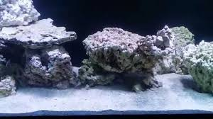Saltwater Aquascaping 75 Gallon Saltwater Tank Aquascape Youtube