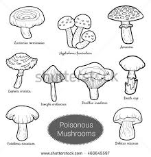 black white set poisonous mushrooms coloring stock vector