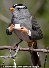 Meme Bird - birds with arms migrate back onto the internet meme radar as