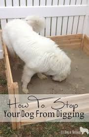 i used concrete blocks as planters to keep my dog from digging