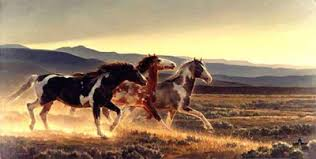 adventures of a horse crazed mind paint horse color patterns